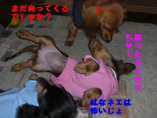 CIMG1432_20100214215228.jpg