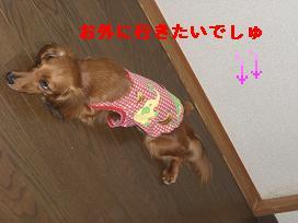 CIMG1445_20100619212001.jpg
