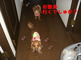 CIMG1452_20100619212332.jpg