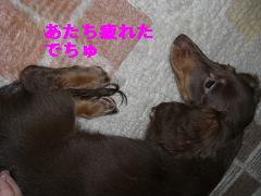 CIMG1453_20100215221303.jpg