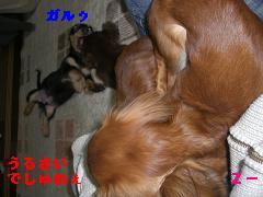 CIMG1454_20100215221601.jpg