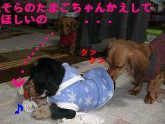 CIMG1474_20100215223025.jpg