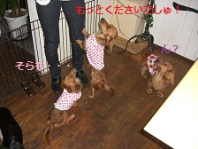 CIMG1494_20100720203655.jpg