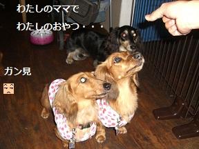CIMG1501_20100720204755.jpg