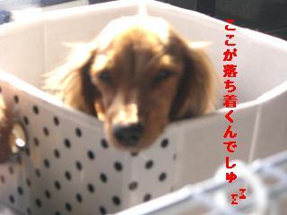 CIMG1517_20100219220618.jpg