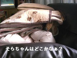 CIMG1529_20100221210054.jpg