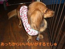 CIMG1542_20100721195339.jpg