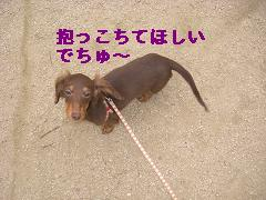 CIMG1564_20100225194616.jpg