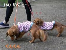 CIMG1570_20100721203046.jpg