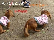 CIMG1571_20100721203111.jpg