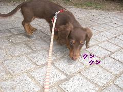 CIMG1576_20100225194659.jpg