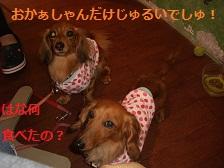 CIMG1593_20100722165342.jpg