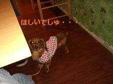 CIMG1594_20100722165450.jpg