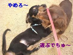 CIMG1596_20100225195002.jpg