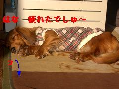 CIMG1597_20100224200637.jpg