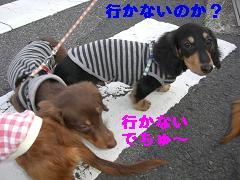 CIMG1668_20100228213457.jpg