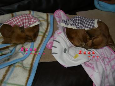 CIMG1674_20100301202342.jpg