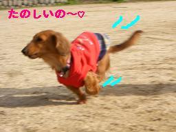 CIMG9981_20100314215355.jpg