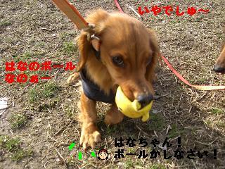 CIMG9994_20100315193144.jpg