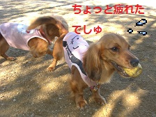 CIMG9994_20100719170814.jpg