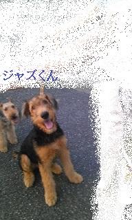 Image182.jpg