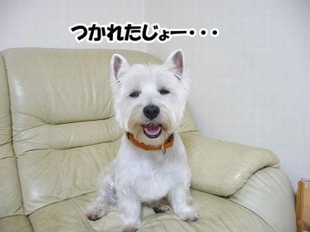 2010_0128_meru_2.jpg