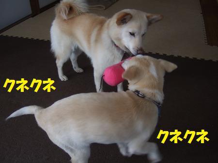 2010_0208_7.jpg