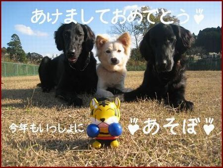 2010_0215_lulu_1.jpg