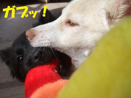 2010_0219_7.jpg