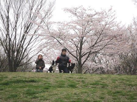 2010_0404_kirari_5.jpg