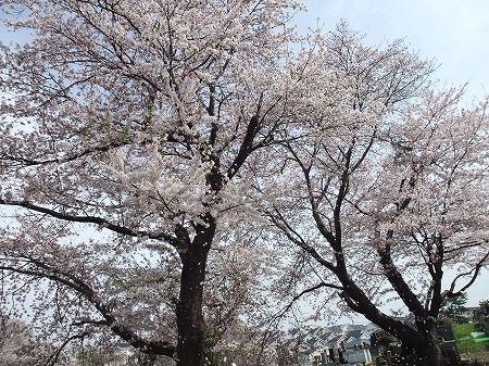 2010_0411_7.jpg