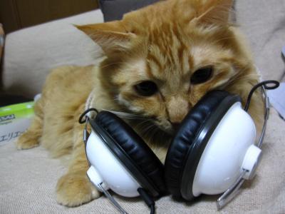 猫になりた~い ん~♪