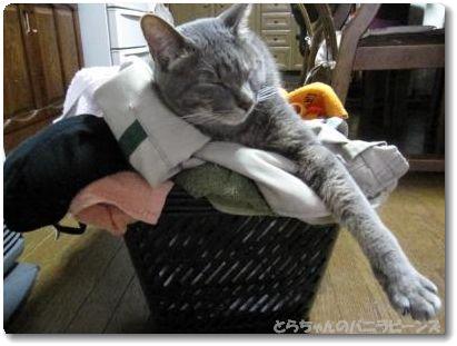 洗濯物が・・・