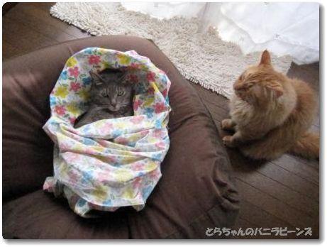 赤ちゃんごっこ