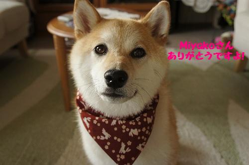 Miyakoさん、ありがとうですよ!