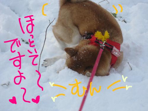 雪中スリスリ