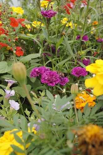 紫竹のお花