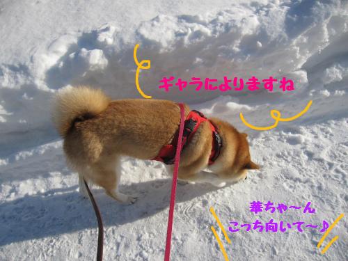 久しぶりのお散歩