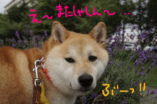 モデル犬①