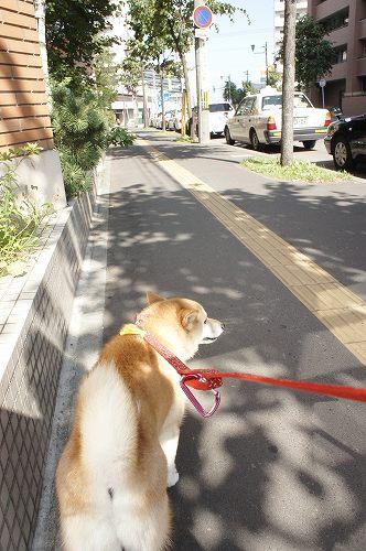 今朝は都会の散歩です^^