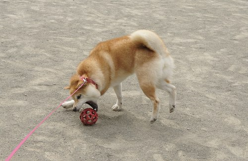 久しぶりのボール遊び