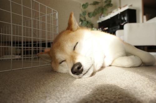 寝るはなび