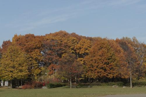 森の公園の紅葉。