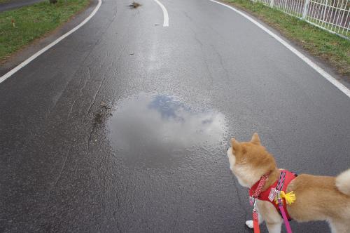 晴れなのに雨
