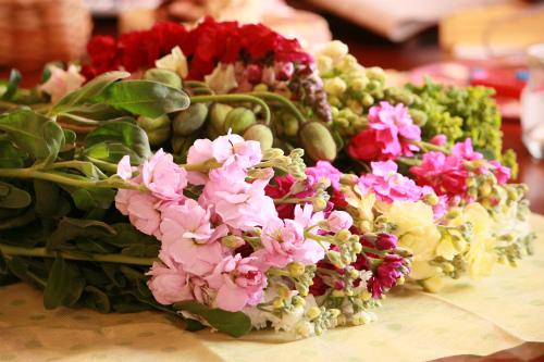 房総のお花畑