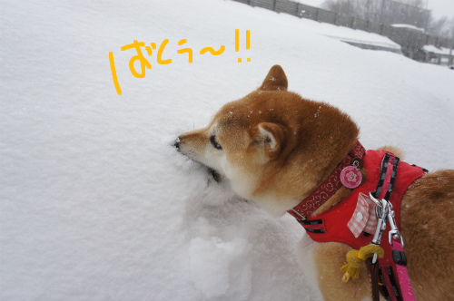 新雪食い!