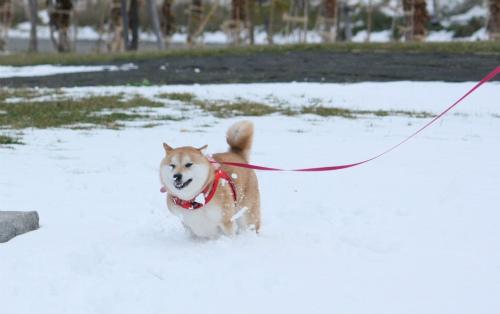 雪は、友達~♪