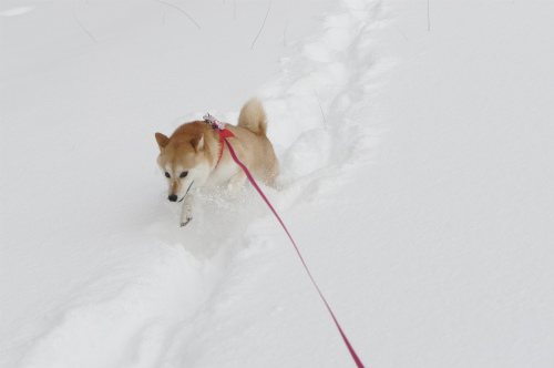 雪中はなび