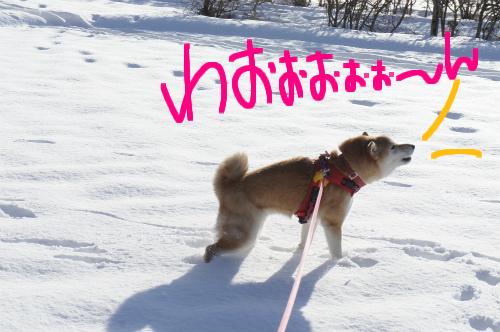 遠吠えじゃぁぁ~!!