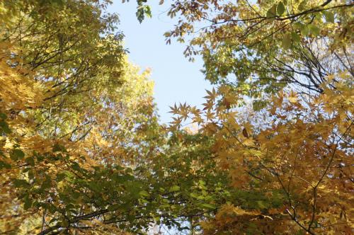 水芭蕉公園の紅葉